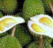 9 Manfaat Buah Durian di Dalam Kandungan Nutrisinya