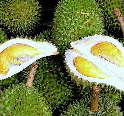 39 Manfaat Buah Durian Bagi Kesehatan di Dalam Kandungan Nutrisinya