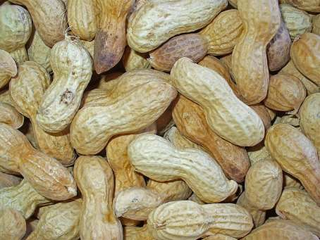 11 Manfaat Kacang Tanah Untuk Kesehatan dan Kecantikan