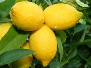 Manfaat lemon