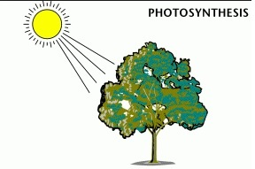 manfaat matahari - fotosintesis