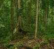12 Manfaat Hutan Bagi Kehidupan Makhluk Hidup Bumi
