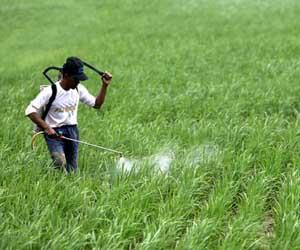 Bidang Pertanian Manfaatcoid