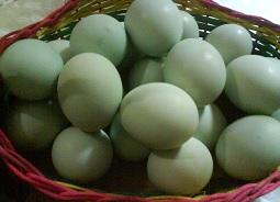 11 Manfaat Telur Bebek Bagi Kesehatan & Kecantikan