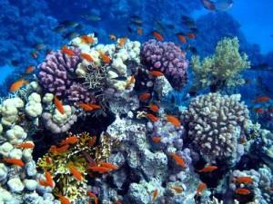 Manfaat Terumbu Karang-Tempat Tinggal Biota Laut