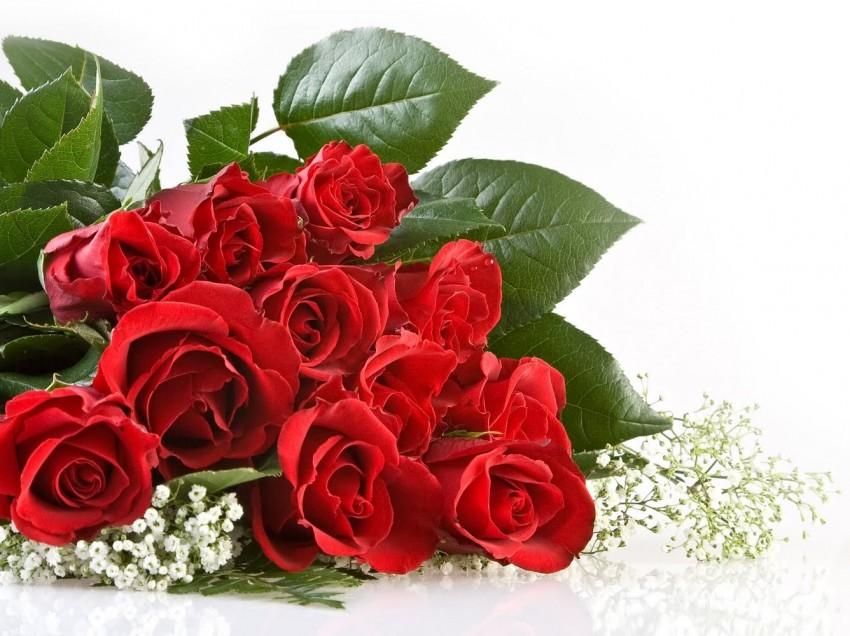 13 Manfaat Bunga Mawar Untuk Kesehatan dan Kecantikan