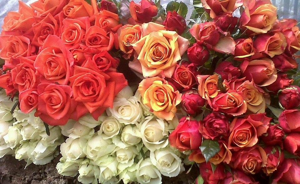 13 Manfaat Bunga Mawar Untuk Kesehatan Dan Kecantikan Manfaat Co Id