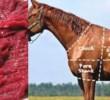 6 Khasiat Daging Kuda Untuk Kesehatan