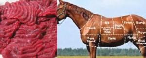 daging kuda