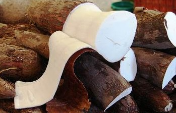 8 Manfaat Ketela Pohon bagi Kesehatan Tubuh dan Pengobatan