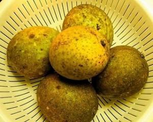 manfaat buah bacang
