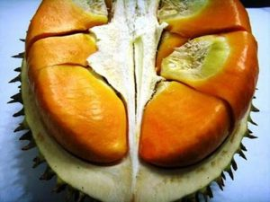 manfaat buah elai