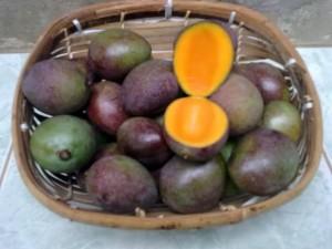 manfaat buah kasturi