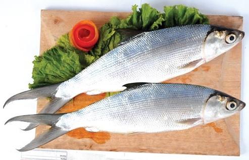 22 Manfaat Ikan Bandeng Bagi Kesehatan