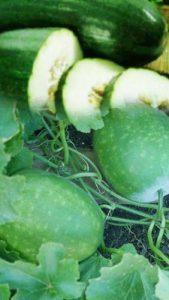manfaat buah kundur