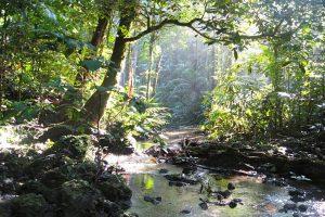 manfaat hutan lindung