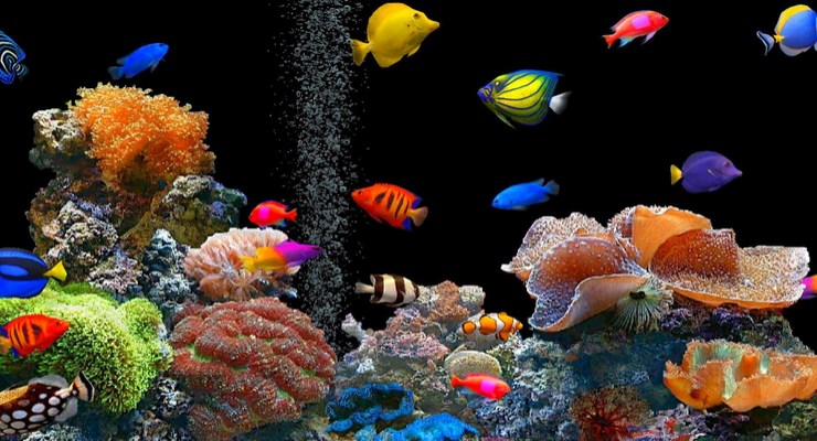 9 Manfaat Ikan Hias Bagi Manusia