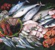 13 Manfaat Ikan Laut Bagi Kesehatan Manusia