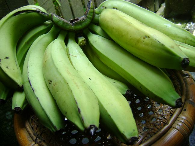 Image result for pisang ambon lumut