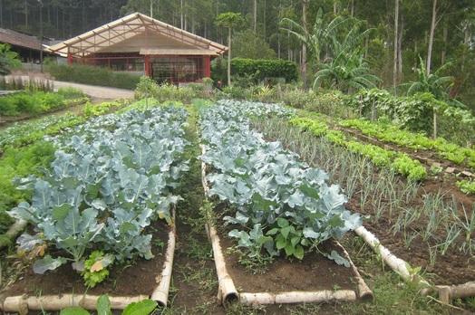 30 Manfaat Sayuran Organik Bagi Kesehatan