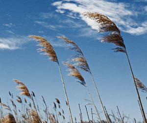 manfaat angin