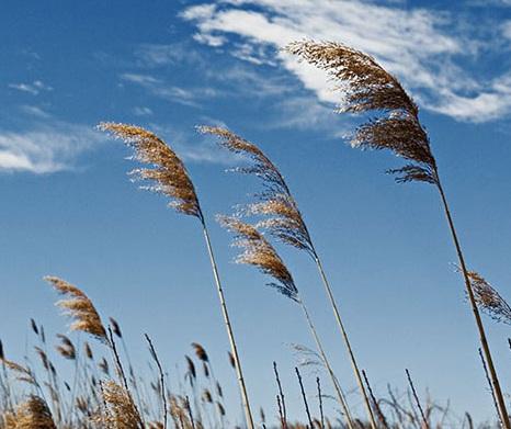 8 Manfaat Angin Bagi Manusia – Tumbuhan – Sumber Tenaga