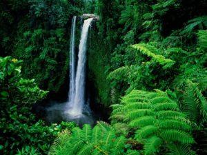 manfaat hutan hujan tropis