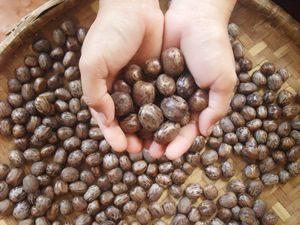 manfaat tanaman biji