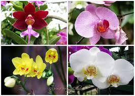 8 Manfaat Bunga Anggrek Bagi Kehidupan Manusia