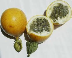 manfaat buah erbis