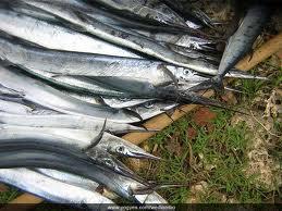 7 Manfaat Ikan Cucut Bagi Kesehatan Tubuh Manusia