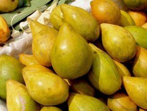 buah gayam