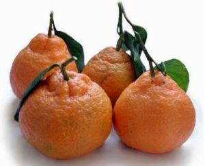 jeruk satsuma